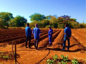 Garlic farm with workers